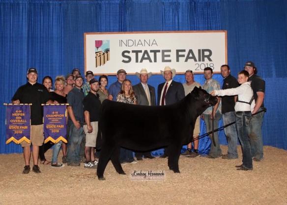 2018 Indiana State Fair – Heifer Show | Competitive Edge